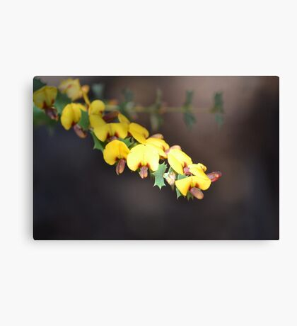 Pea flowers Canvas Print