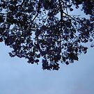 Jacaranda Sky by KazM