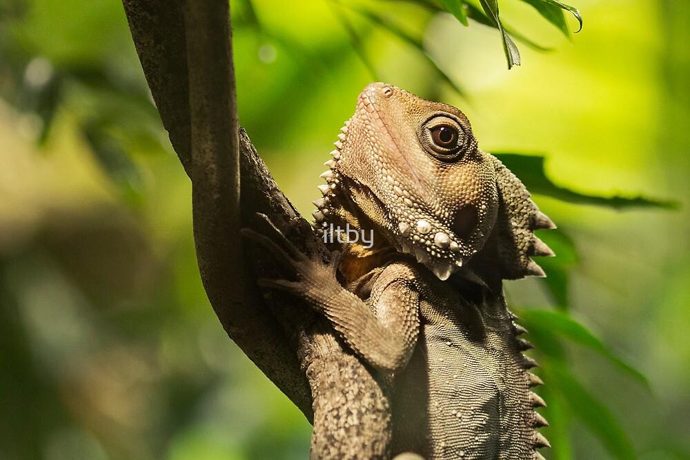 Reptilian Eye by iltby