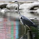Grey Heron by digitalanomaly