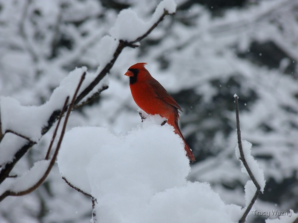 Heat In The Snow by Tracy Wazny
