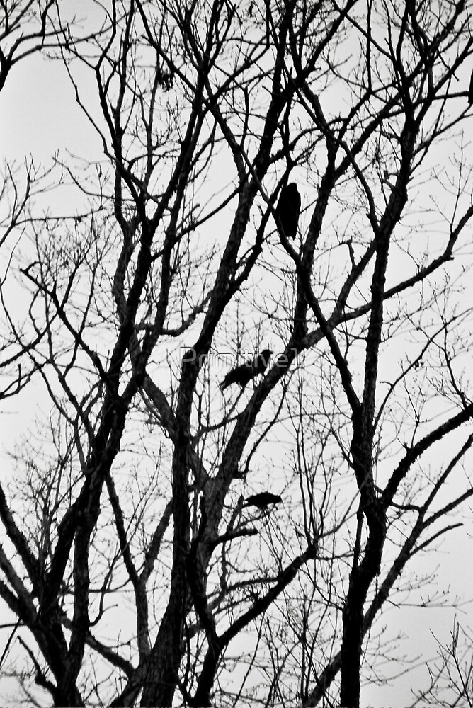 Crow Silouette II by Primitive1