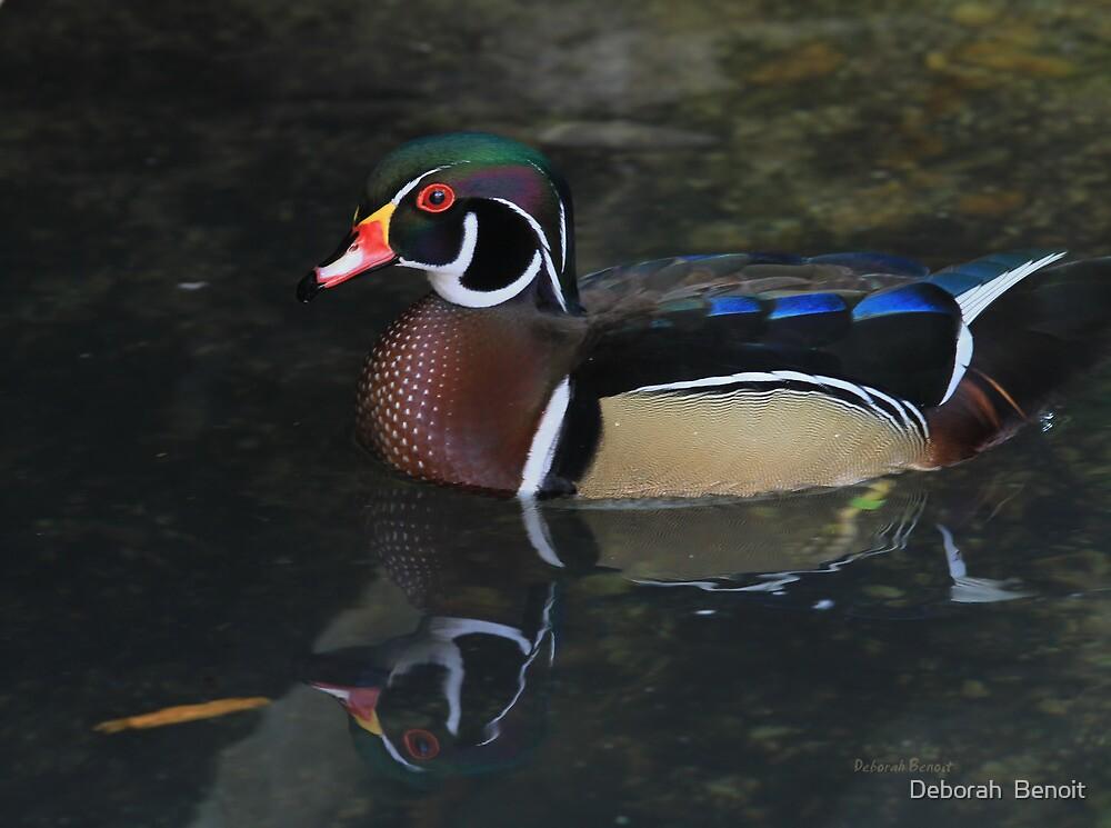 Reflective Wood Duck by Deborah  Benoit