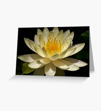 water lilly up close Greeting Card