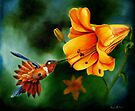Rufous Hummingbird and the Lily by Phyllis Beiser