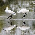 Lovers Tiff  Spoonbills by Kym Bradley