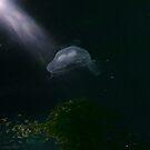 Jelly Fish Dreaming by Gavin Kerslake