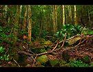 Il caos della natura by vilaro Images