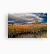 Clouds and Reeds Canvas Print