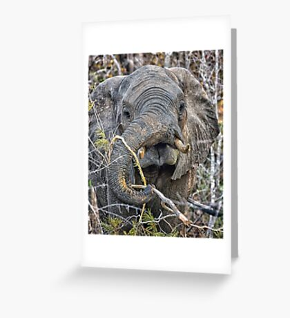 Breaking Branches Greeting Card