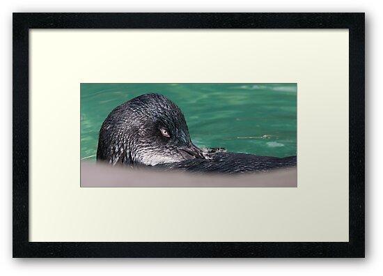 """""""Little Penguin"""" by Sandra Chung"""