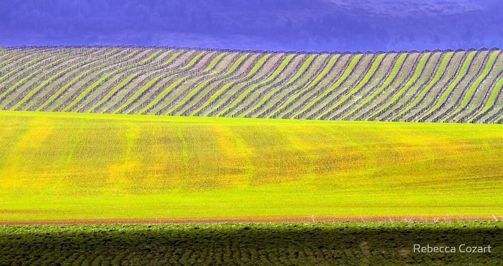 Vineyard by Rebecca Cozart