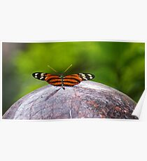 Ismenius Tiger Butterfly Poster
