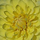 Yellow Delight by Monnie Ryan