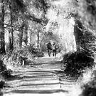 walking by algazar