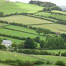 Four Green Fields by Lynda Earley