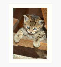 Blue-eyed kitten Art Print