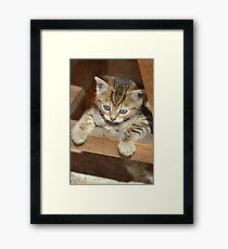 Blue-eyed kitten Framed Print