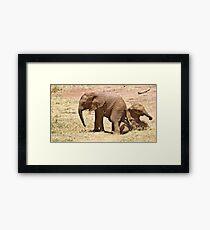 Samburu Elephant calves playing Framed Print