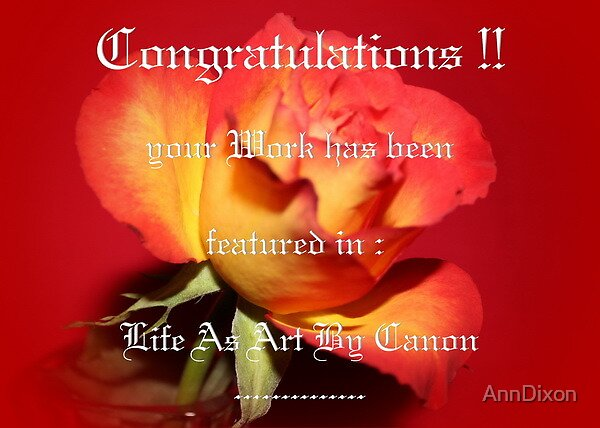 BANNER : Life as Art by Canon by AnnDixon