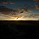 wheat field by Beverly Cash