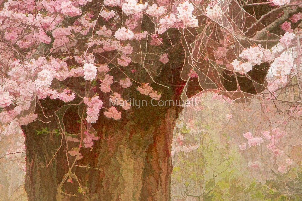 Spring Awakening by Marilyn Cornwell