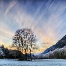 Winter frost by Beverly Cash