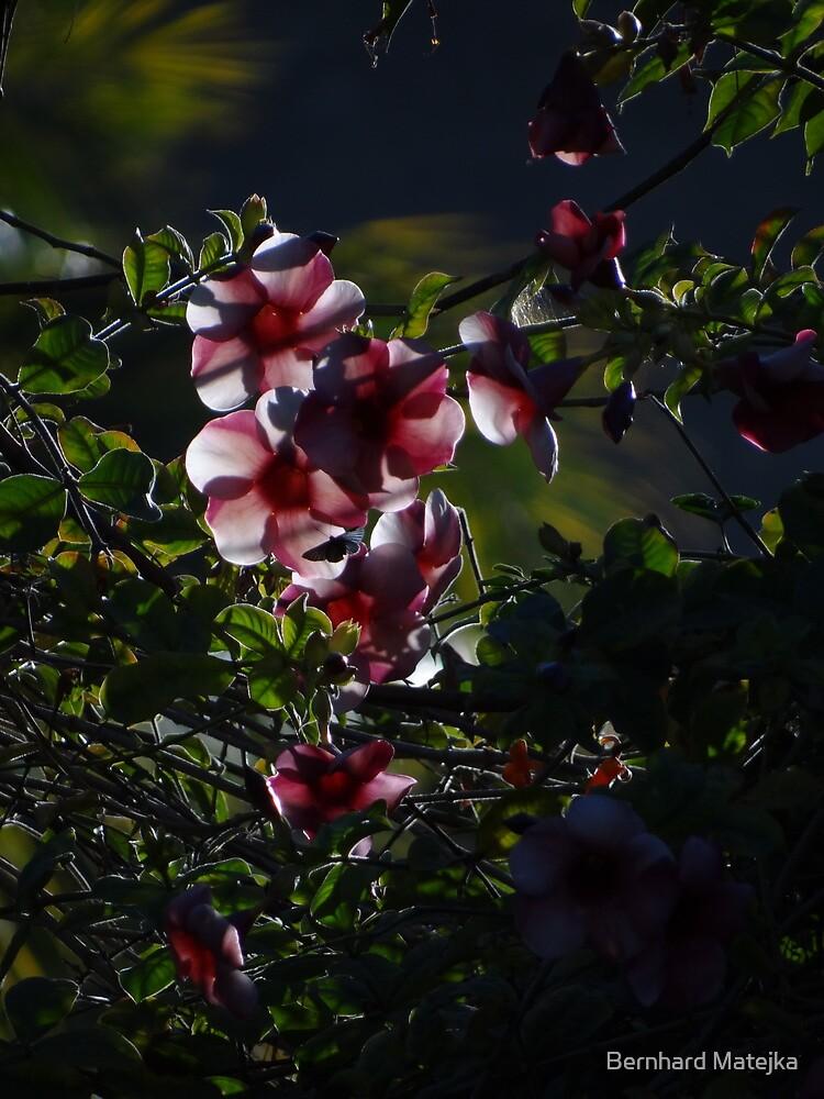 Nature And Light II - Naturaleza Y Luz by Bernhard Matejka