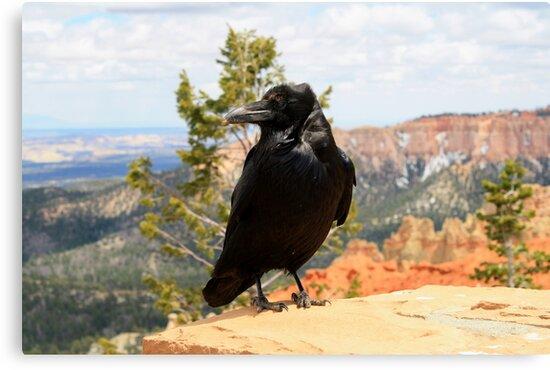 Raven at Bryce Canyon National Park,Utah,USA by Anthony & Nancy  Leake