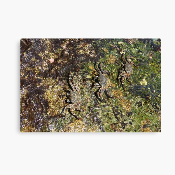 Perfectly Camouflaged Canvas Print