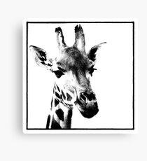 Gentle Giraffe Canvas Print