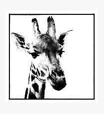 Gentle Giraffe Photographic Print