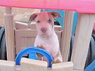 What Do You Mean I Can't Really Drive This? by Ginny York