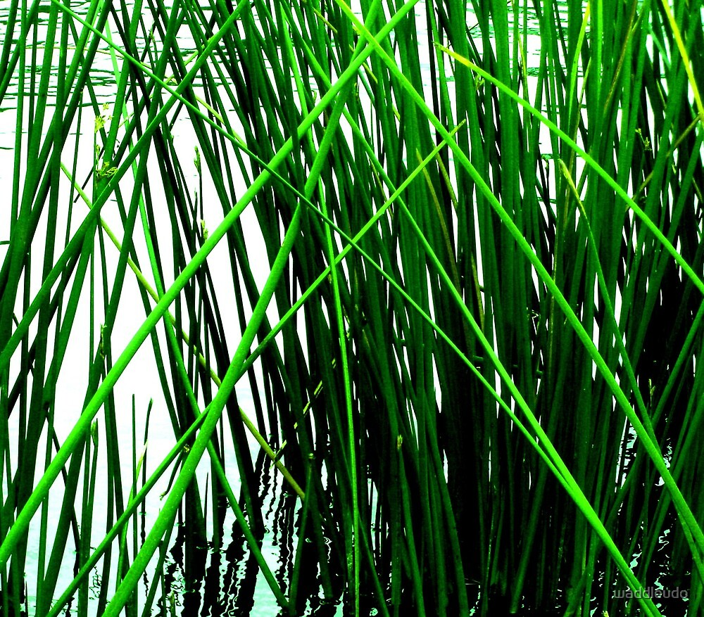 Crossed Reeds by waddleudo