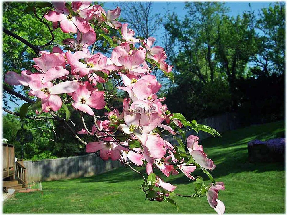 Our Backyard During Springtime by Bine