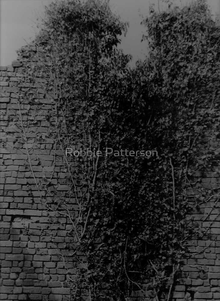Old Wall And Ivy by Robbie Patterson
