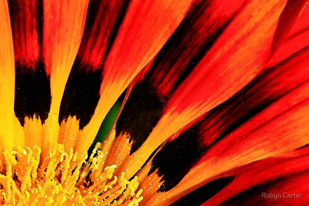 Flower on Fire by Robyn Carter