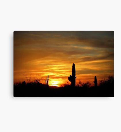 Sunset in the Sonoran Desert Canvas Print