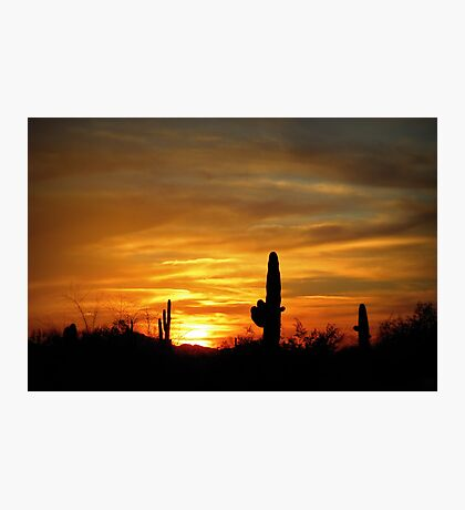 Sunset in the Sonoran Desert Photographic Print