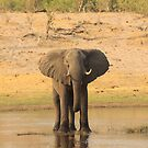 River Elephant by Donald  Mavor