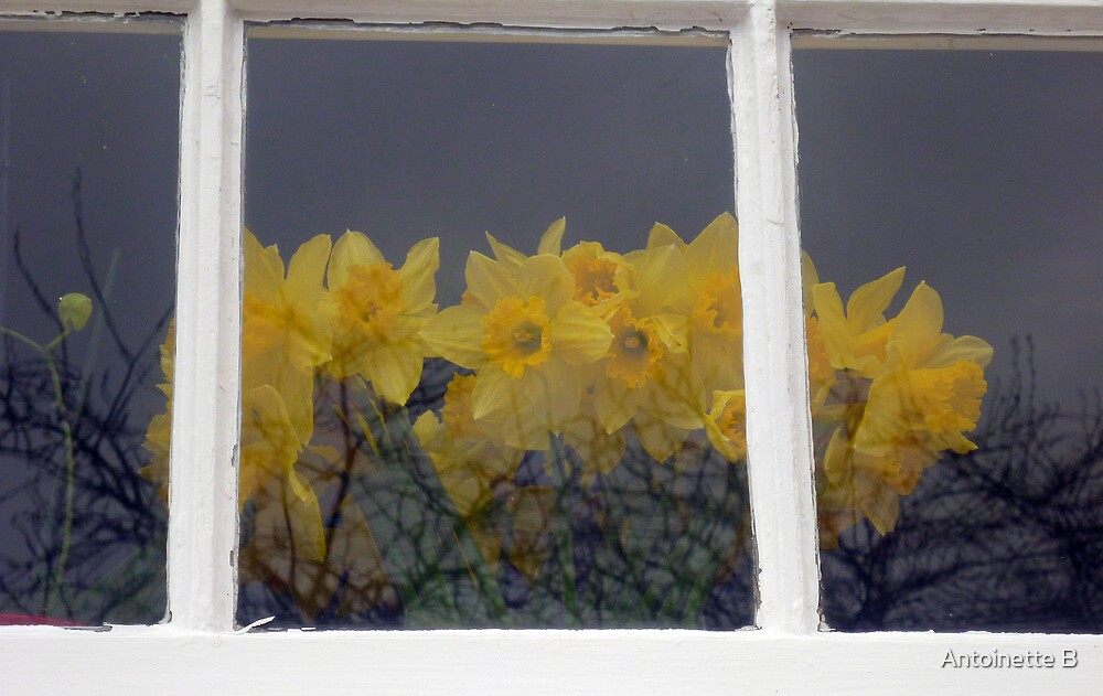 Daffodils Behind The Window by Antoinette B