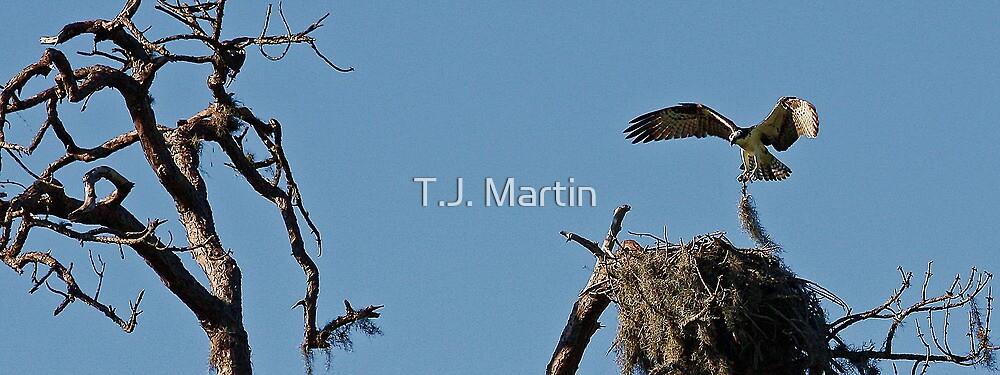 Osprey Nest by T.J. Martin
