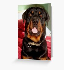 Portrait Of A Young Rottweiler Male Dog Greeting Card