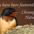 Closeups in Nature Banner by Veronica Schultz