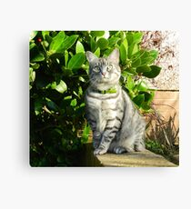 Springtime adventurer! Canvas Print