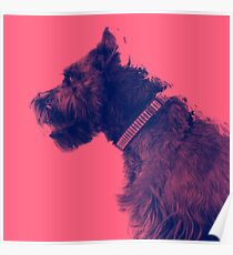 Pet Portraiture, Profile Poster