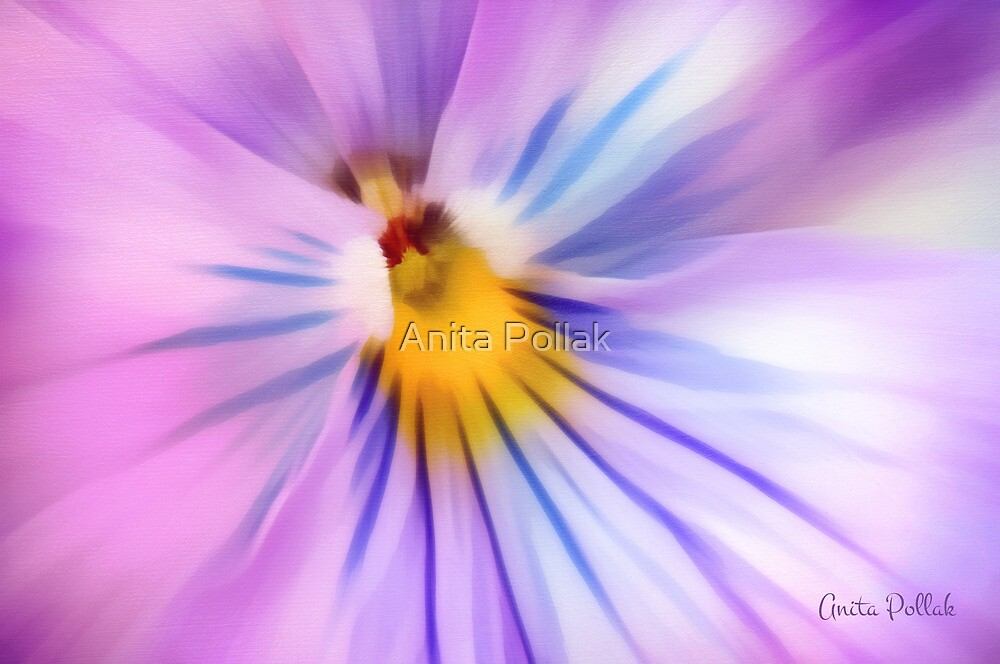 Party Time Pansy by Anita Pollak
