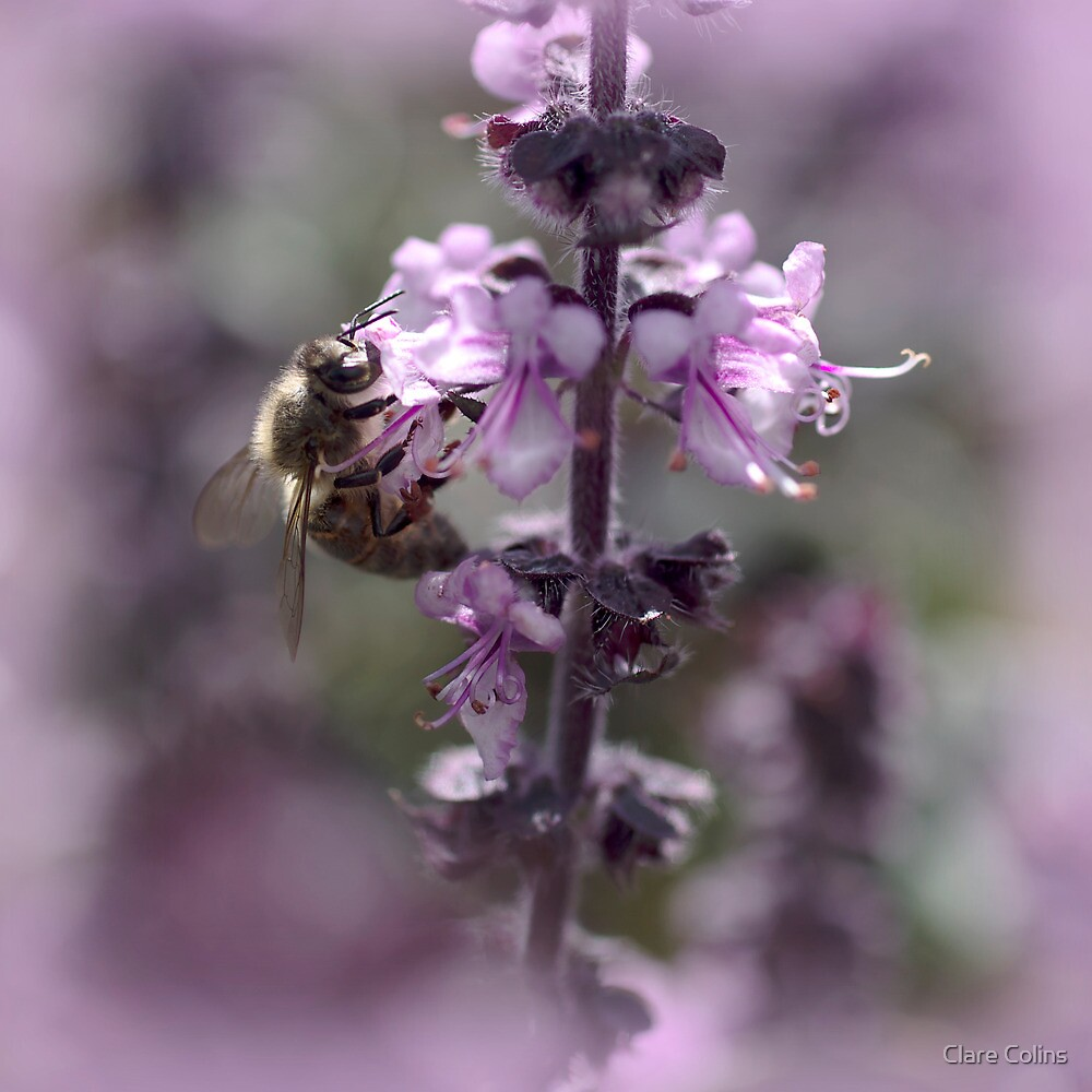 a hive of activity - bees in the basil by Clare Colins