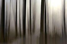 curtain of light by JOSEPHMAZZUCCO