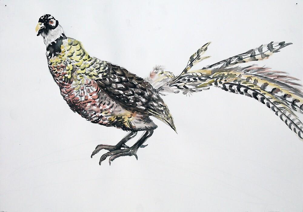Pheasant by Sylvia  Hollis